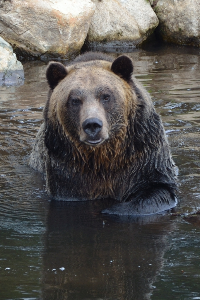 6. Brown Bear_01