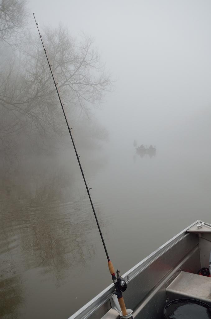 Fog-scenic