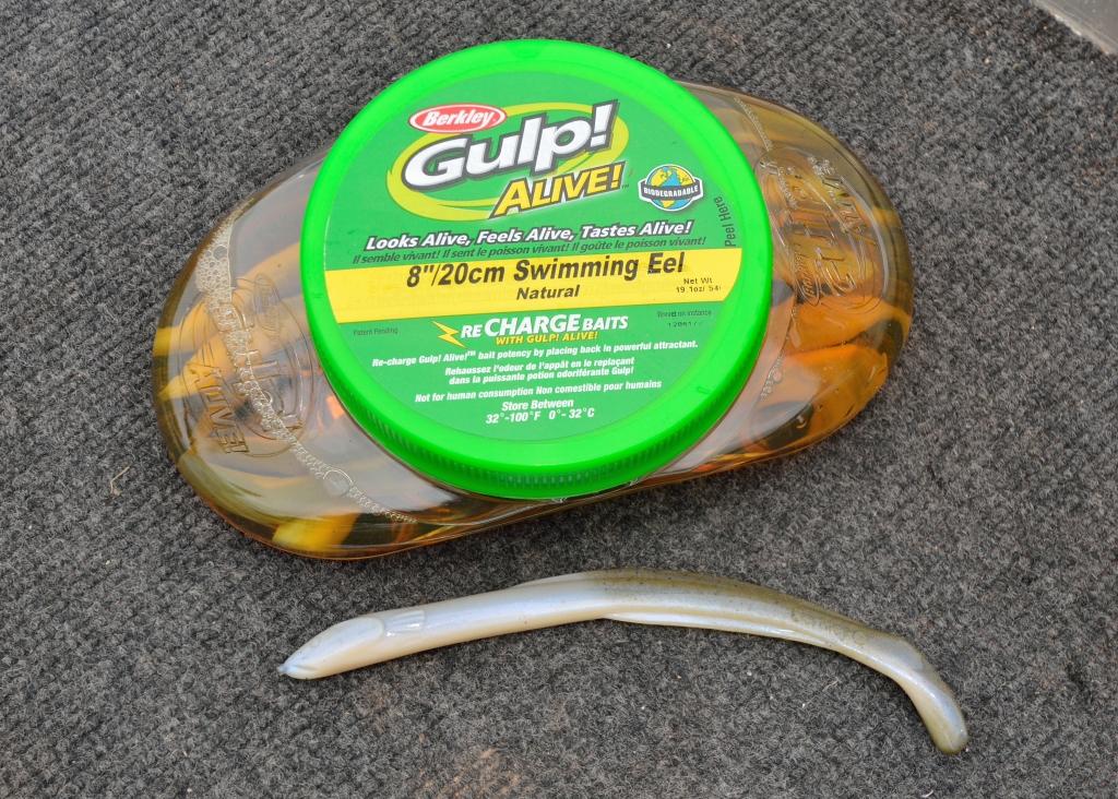 gulp eels2_01